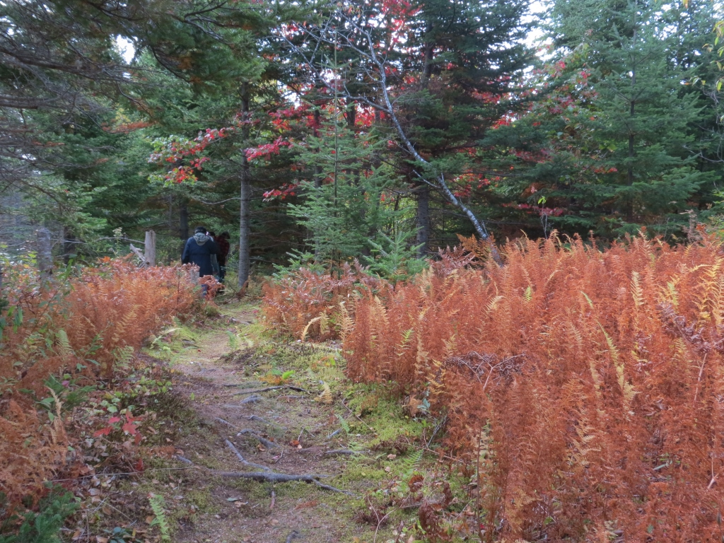 On-site rehearsal, woodland trail, Oct. 2014